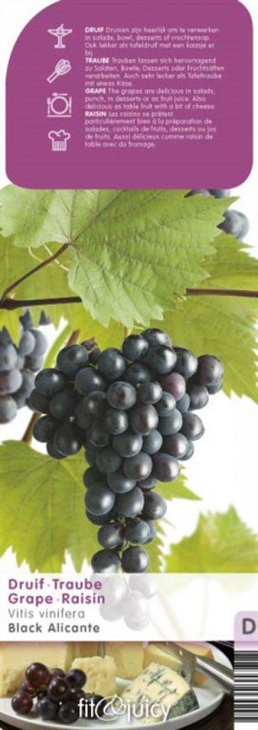 druivenplanten
